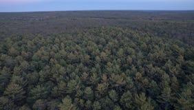 Floresta de Kent County Fotografia de Stock