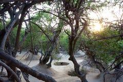 A floresta de Krishna fotografia de stock