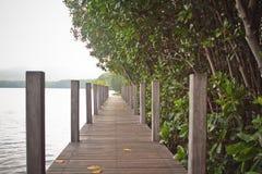 Floresta de Kung Kraben Mangrove foto de stock