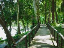 Floresta de madeira da ponte no parque nacional Phang Nga de Khaolak-Lumru, Tailândia Imagens de Stock Royalty Free