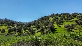 Floresta de Marrocos norte foto de stock
