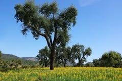 Floresta de Mediterranic. Fotografia de Stock Royalty Free