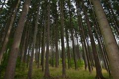 Floresta de Mountin em agosto Imagem de Stock
