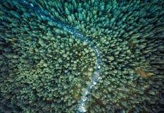 Floresta de Noruega imagem de stock