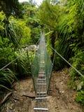 Floresta de Nova Zelândia Imagem de Stock