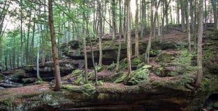 Floresta de Ohio imagens de stock