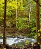 Floresta de Oklahoma imagem de stock royalty free