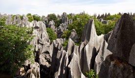 A floresta de pedra Imagem de Stock Royalty Free