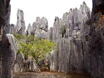 A floresta de pedra Fotos de Stock