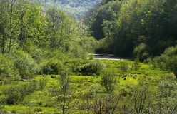 Floresta de Pensilvânia Fotografia de Stock