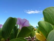 Floresta de Pohuehue no console grande, Havaí Imagem de Stock