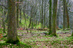Floresta de Rydal imagem de stock