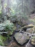 Floresta de Skagway Fotos de Stock