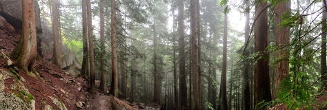Floresta de Squamish Imagem de Stock Royalty Free