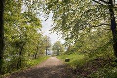 Floresta de Sunny Beech em Dinamarca imagens de stock