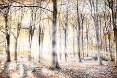 Floresta de sussurro na queda do outono Imagem de Stock