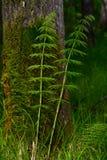 Floresta de Taiga fotos de stock royalty free