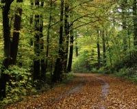 Floresta de Teutoburger Imagens de Stock Royalty Free