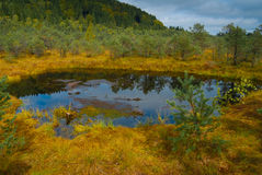 Floresta de Tinovul Mohos Foto de Stock Royalty Free