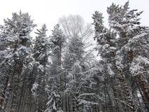 Floresta de Ural no inverno Foto de Stock Royalty Free