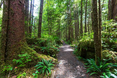 Floresta de Vancôver Imagem de Stock