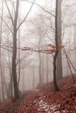 Floresta de Wernigerode Fotos de Stock