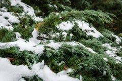 Floresta de Wernigerode Fotos de Stock Royalty Free