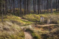 Floresta de Whiteford na península de Gower em Swansea fotografia de stock