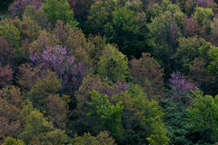 Floresta decíduo, conceito sazonal da floresta temperada da mudança Imagens de Stock Royalty Free