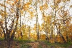 Floresta decíduo do outono imagem de stock