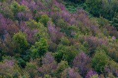 Floresta decíduo em cores do outono Mudança sazonal temperada para Imagens de Stock