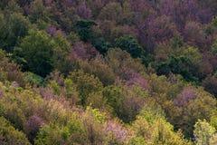 Floresta decíduo em cores do outono Mudança sazonal temperada para Imagem de Stock
