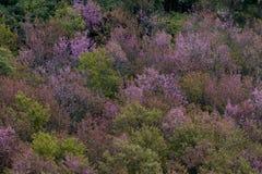 Floresta decíduo em cores do outono Mudança sazonal temperada para Imagem de Stock Royalty Free