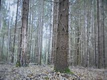 Floresta decíduo em Rússia central video estoque