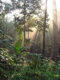 Floresta decíduo, Tailândia Fotografia de Stock Royalty Free