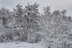 Floresta decíduo do inverno Foto de Stock Royalty Free