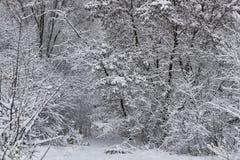 Floresta decíduo do inverno Fotografia de Stock Royalty Free
