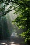 Floresta deciduous à terra do cruzamento de estrada fotos de stock royalty free