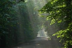 Floresta deciduous velha à terra do cruzamento de estrada imagem de stock royalty free