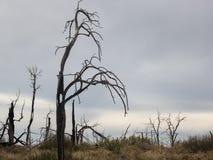 Floresta delével fotografia de stock
