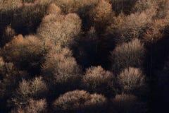 Floresta densa Imagem de Stock