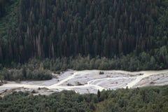 Floresta densa Fotos de Stock