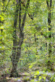Floresta densa bonita Fotos de Stock Royalty Free