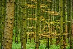Floresta densa no outono fotos de stock royalty free