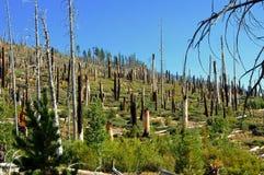 Floresta destruída fotografia de stock royalty free