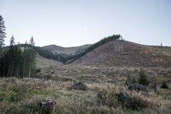 Floresta devastada pela madeira que colhe no parque Nizke Tatry de Narodny em Eslováquia fotos de stock