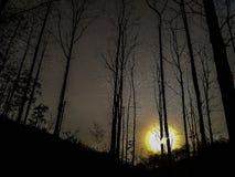 floresta do ฺBlack foto de stock royalty free