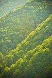 Floresta do abeto foto de stock royalty free