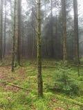Floresta do abeto em um dia nevoento Imagens de Stock Royalty Free