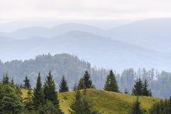 Floresta do abeto nas inclinações das montanhas Tempo nublado, névoa Fotos de Stock